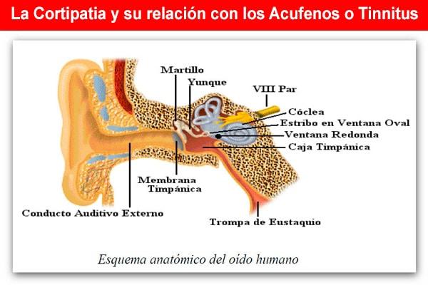 La Cortipatia y su relación con los Acufenos o Tinnitus